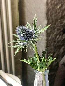 Scottish National Emblem: The Thistle